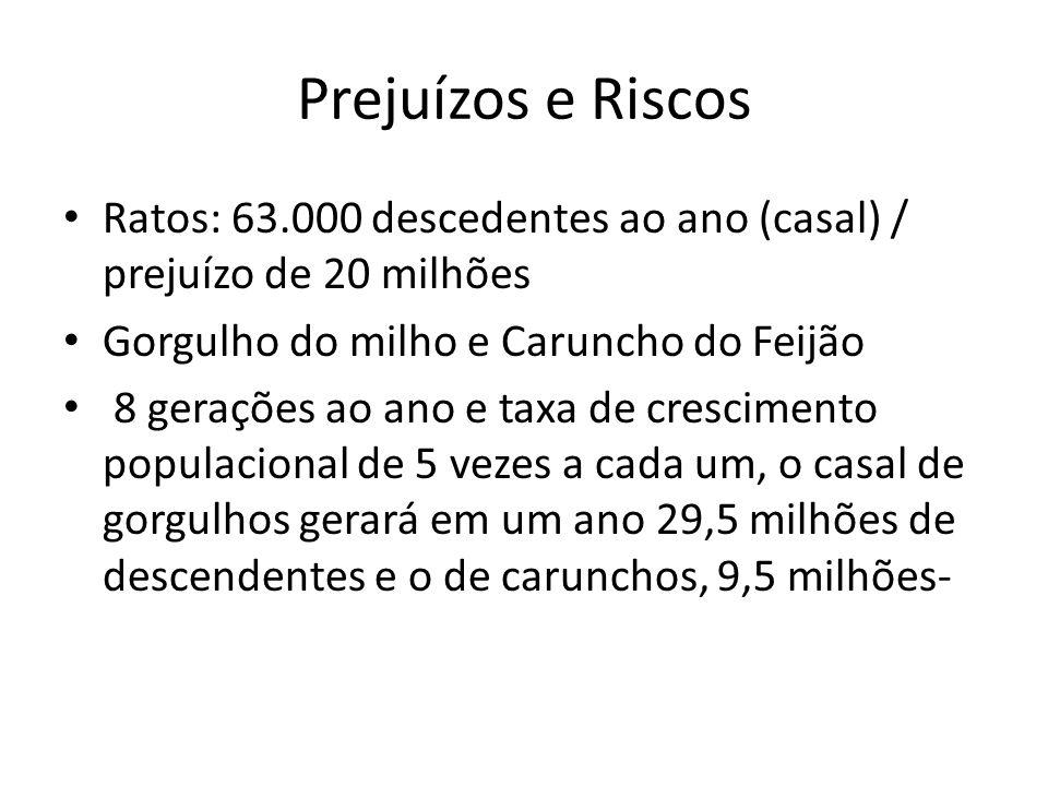 Prejuízos e Riscos Ratos: 63.000 descedentes ao ano (casal) / prejuízo de 20 milhões. Gorgulho do milho e Caruncho do Feijão.