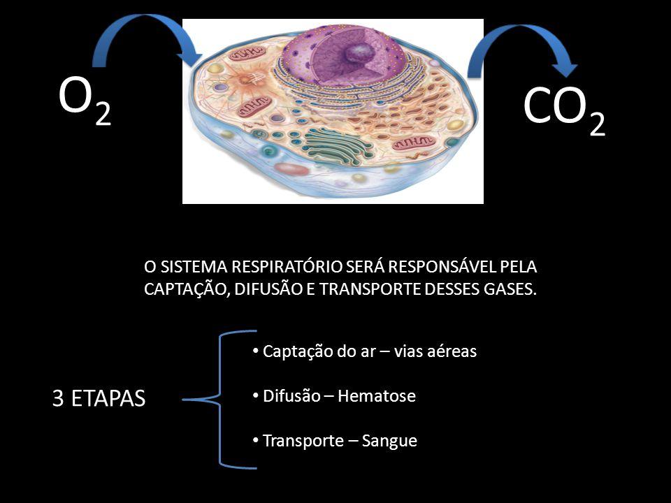 O2 CO2. O SISTEMA RESPIRATÓRIO SERÁ RESPONSÁVEL PELA CAPTAÇÃO, DIFUSÃO E TRANSPORTE DESSES GASES. Captação do ar – vias aéreas.