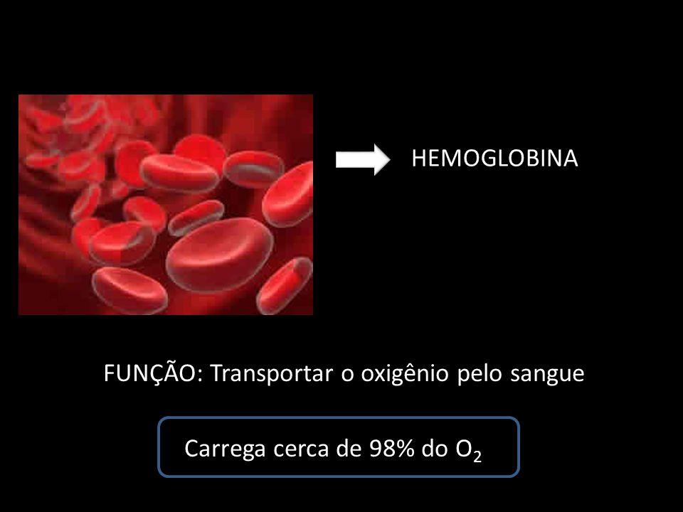 FUNÇÃO: Transportar o oxigênio pelo sangue