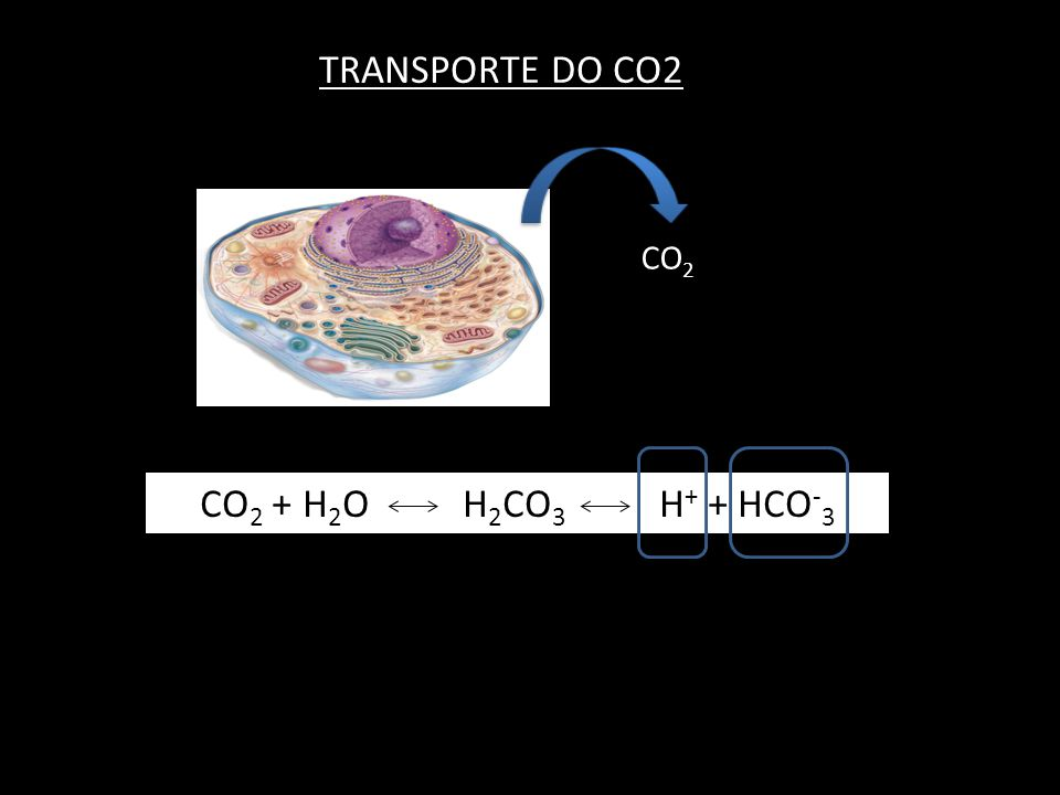 TRANSPORTE DO CO2 CO2 CO2 + H2O H2CO3 H+ + HCO-3