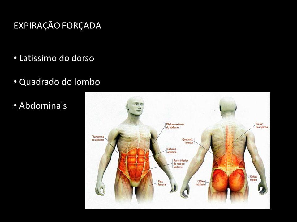 EXPIRAÇÃO FORÇADA Latíssimo do dorso Quadrado do lombo Abdominais