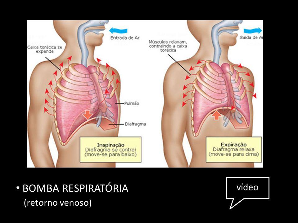 BOMBA RESPIRATÓRIA (retorno venoso) vídeo