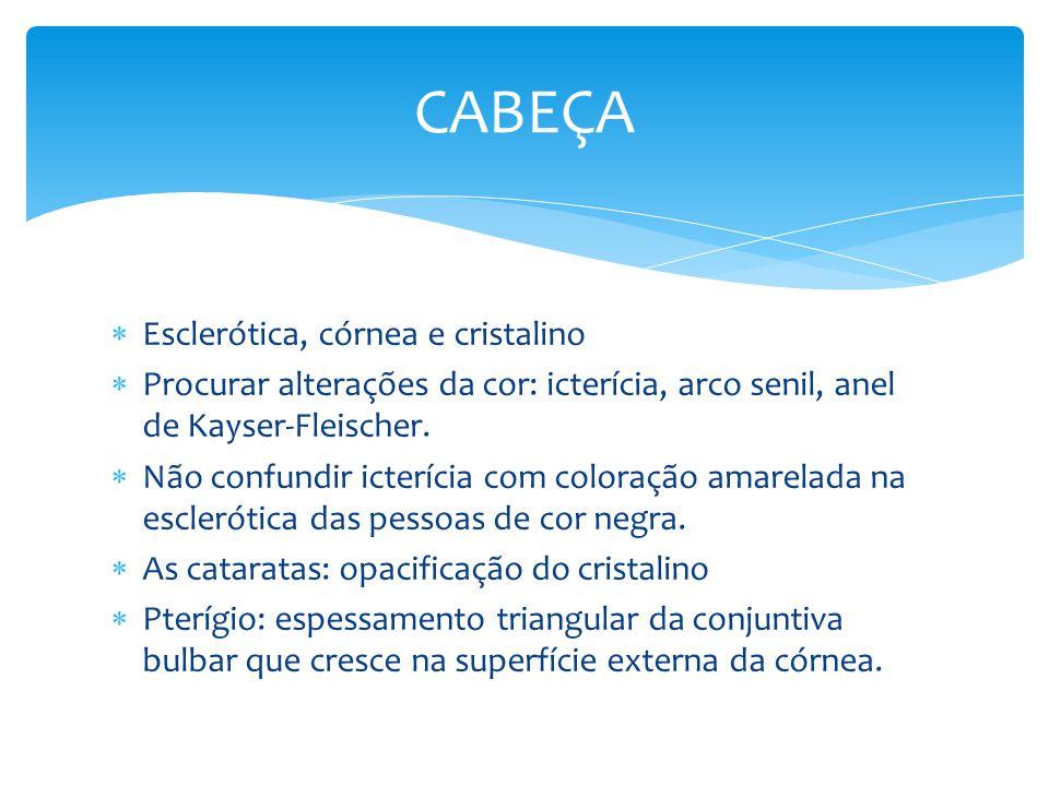 CABEÇA Esclerótica, córnea e cristalino