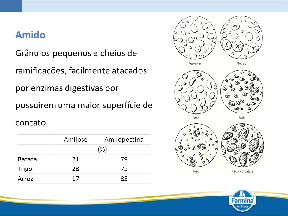 Amido Grânulos pequenos e cheios de ramificações, facilmente atacados por enzimas digestivas por possuirem uma maior superfície de contato.