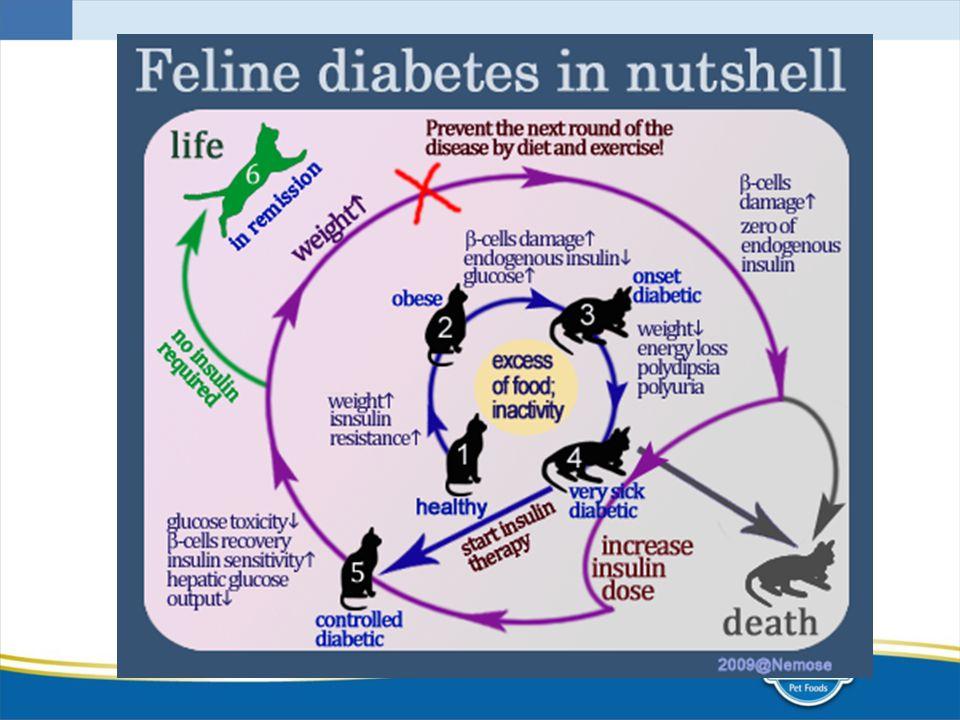 1- animal saudavel, 2- aumento de peso; aumento da resistencia insulinica (obesidade), aumento do dano ás celulas beta; diminuição da insulina endógena, aumento da taxa de glicose (início diabete), 3- perda de peso; perda de energia; poliuria e polidpsia (quadro avançado de diabete), 4- morte ou inicio da terapia insulinica.