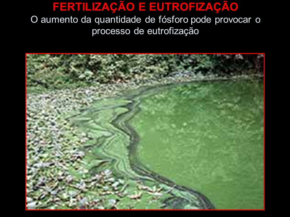 FERTILIZAÇÃO E EUTROFIZAÇÃO O aumento da quantidade de fósforo pode provocar o processo de eutrofização