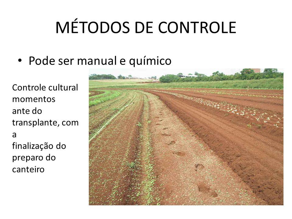 MÉTODOS DE CONTROLE Pode ser manual e químico