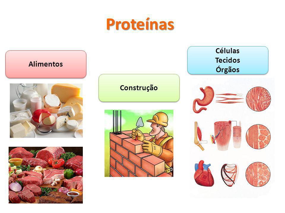 Proteínas Células Tecidos Órgãos Alimentos Construção