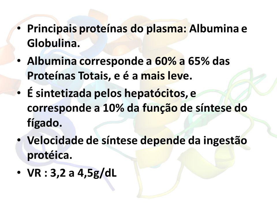 Principais proteínas do plasma: Albumina e Globulina.