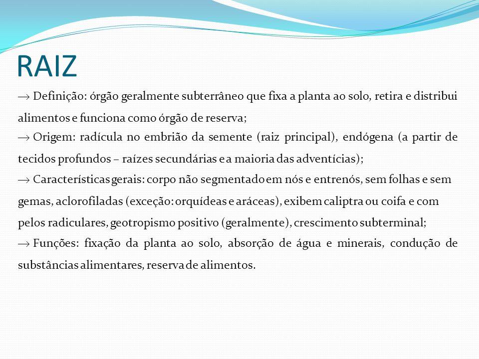 RAIZ Definição: órgão geralmente subterrâneo que fixa a planta ao solo, retira e distribui alimentos e funciona como órgão de reserva;