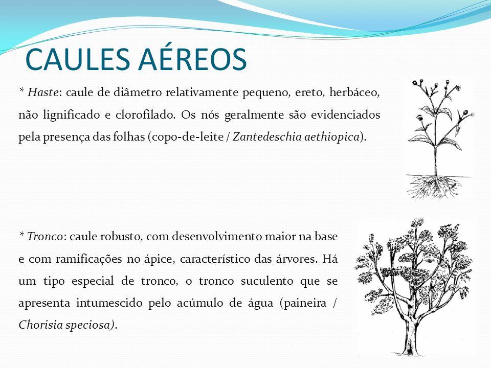 CAULES AÉREOS