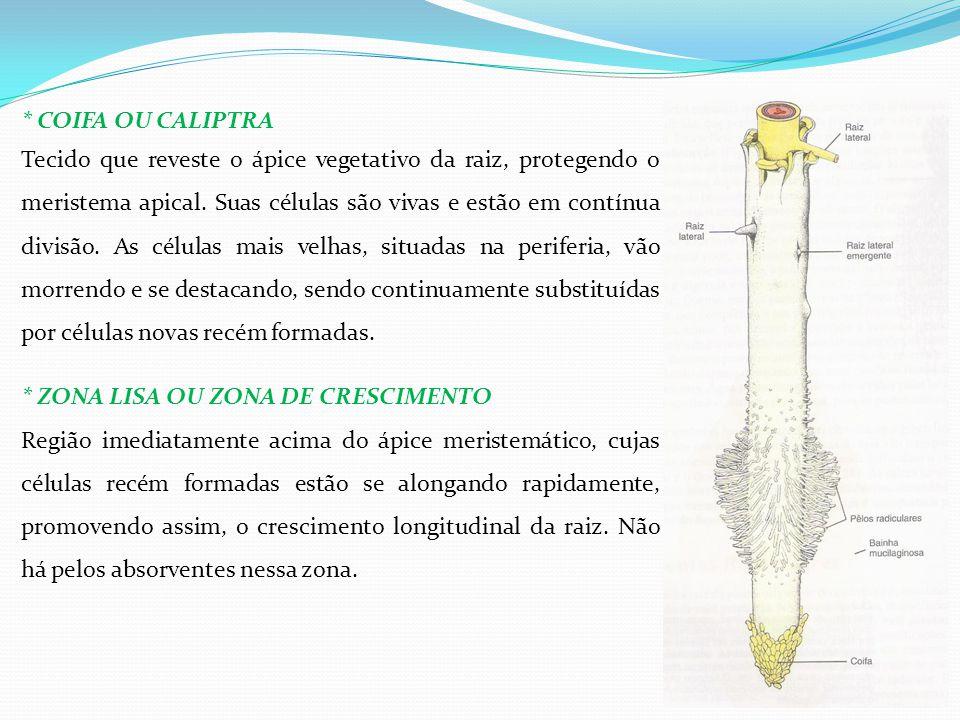 * COIFA OU CALIPTRA