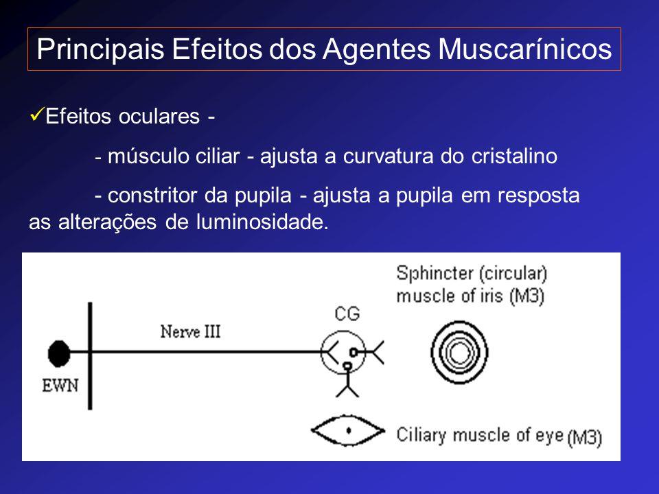 Principais Efeitos dos Agentes Muscarínicos