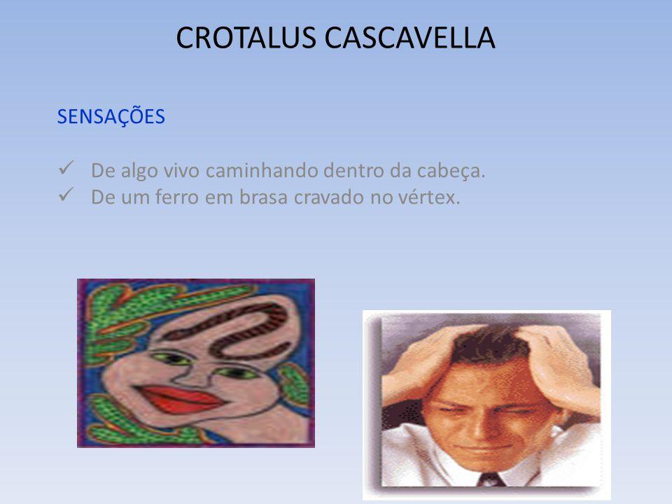 CROTALUS CASCAVELLA SENSAÇÕES