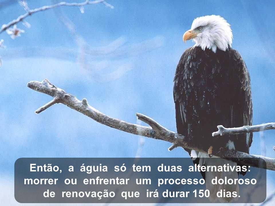 Então, a águia só tem duas alternativas: