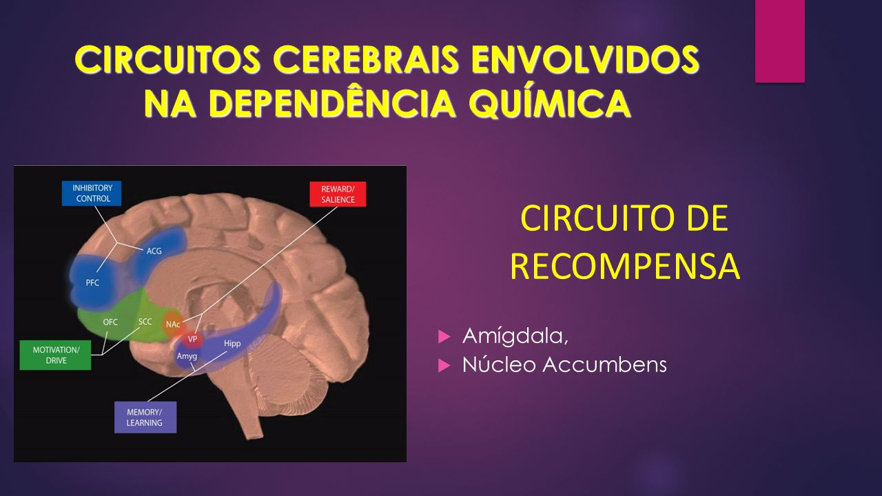 CIRCUITOS CEREBRAIS ENVOLVIDOS NA DEPENDÊNCIA QUÍMICA