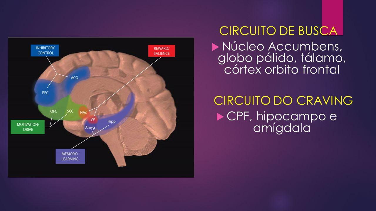 Núcleo Accumbens, globo pálido, tálamo, córtex orbito frontal