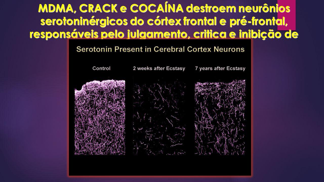 MDMA, CRACK e COCAÍNA destroem neurônios serotoninérgicos do córtex frontal e pré-frontal, responsáveis pelo julgamento, critica e inibição de impulsos