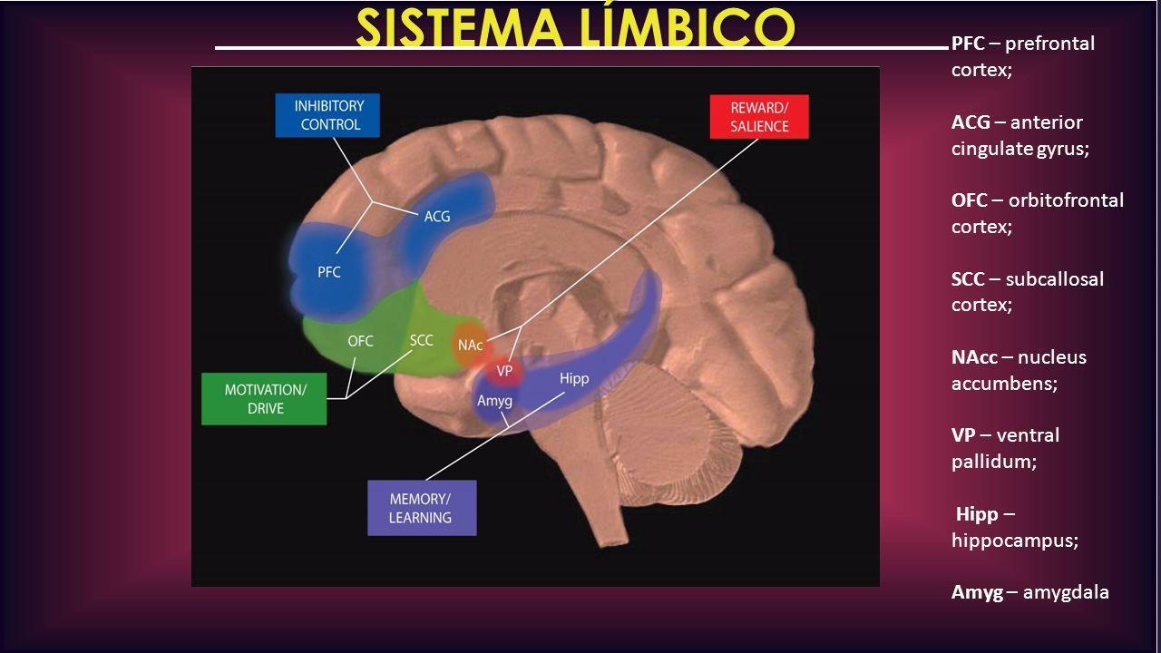 SISTEMA LÍMBICO PFC – prefrontal cortex;