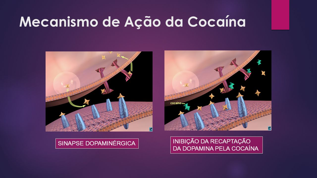 Mecanismo de Ação da Cocaína