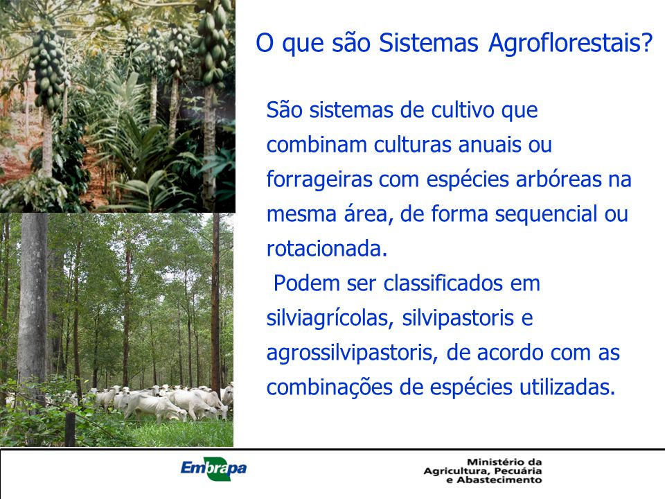 O que são Sistemas Agroflorestais