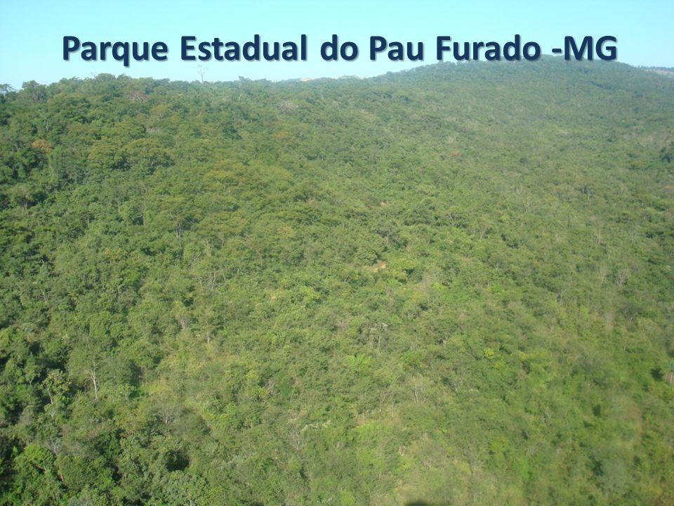 Parque Estadual do Pau Furado -MG