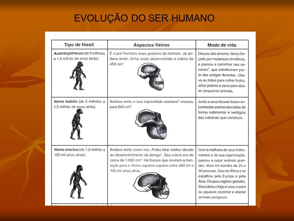 EVOLUÇÃO DO SER HUMANO ARTIGO DA FOLHA- NOVO HOMINÍDEO/ANTROPÓIDE CHINÊS