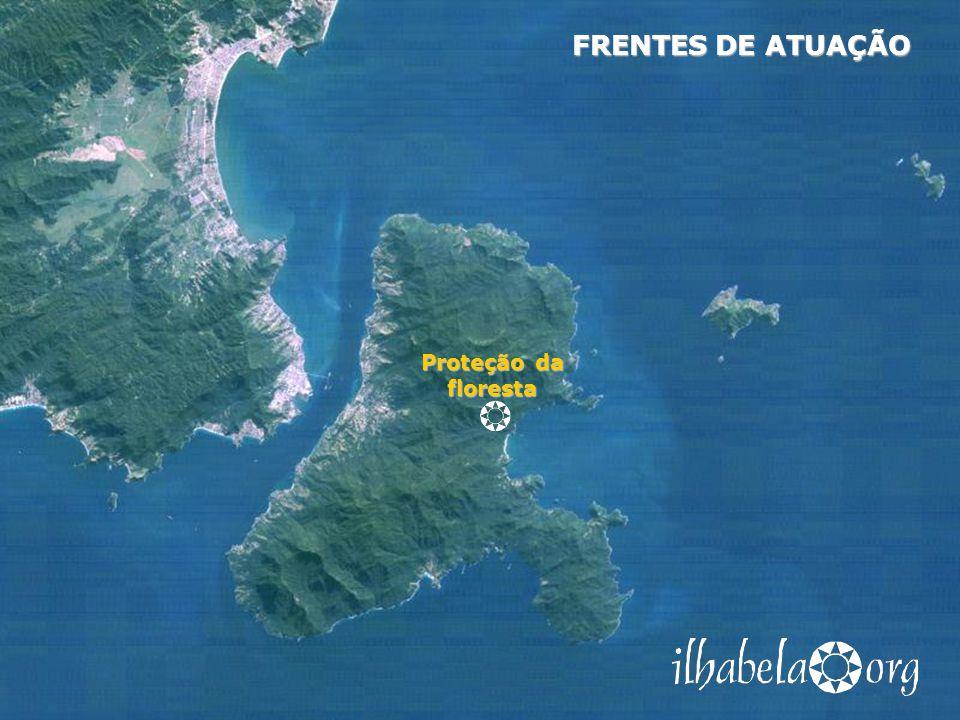FRENTES DE ATUAÇÃO Proteção da floresta