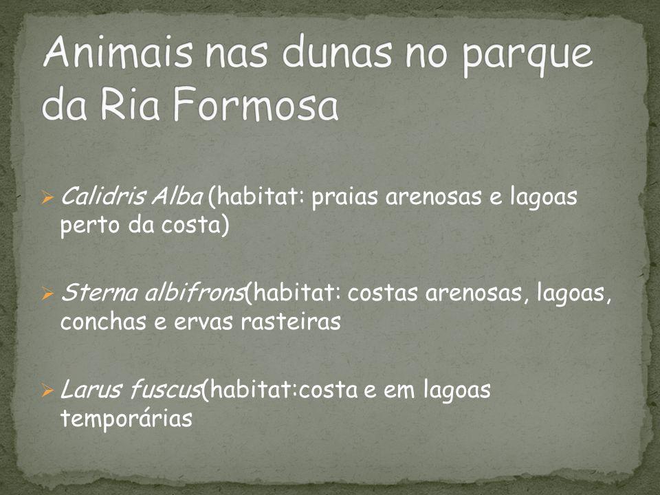 Animais nas dunas no parque da Ria Formosa