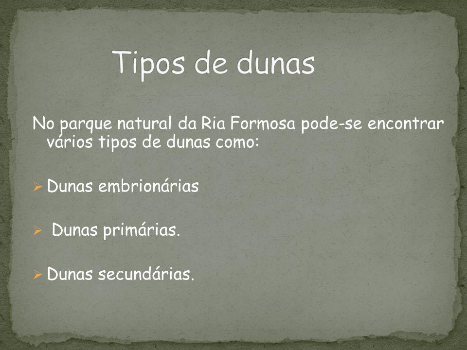 Tipos de dunas No parque natural da Ria Formosa pode-se encontrar vários tipos de dunas como: Dunas embrionárias.