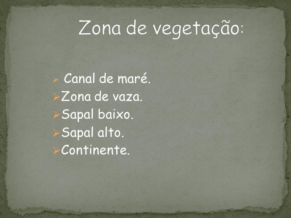 Zona de vegetação: Zona de vaza. Sapal baixo. Sapal alto. Continente.