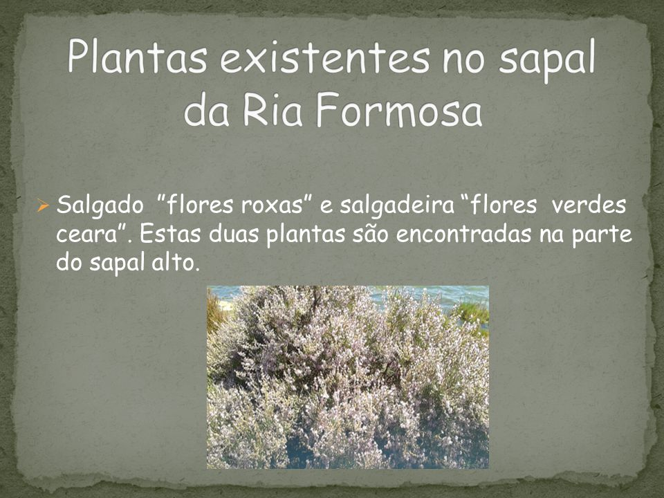 Plantas existentes no sapal da Ria Formosa