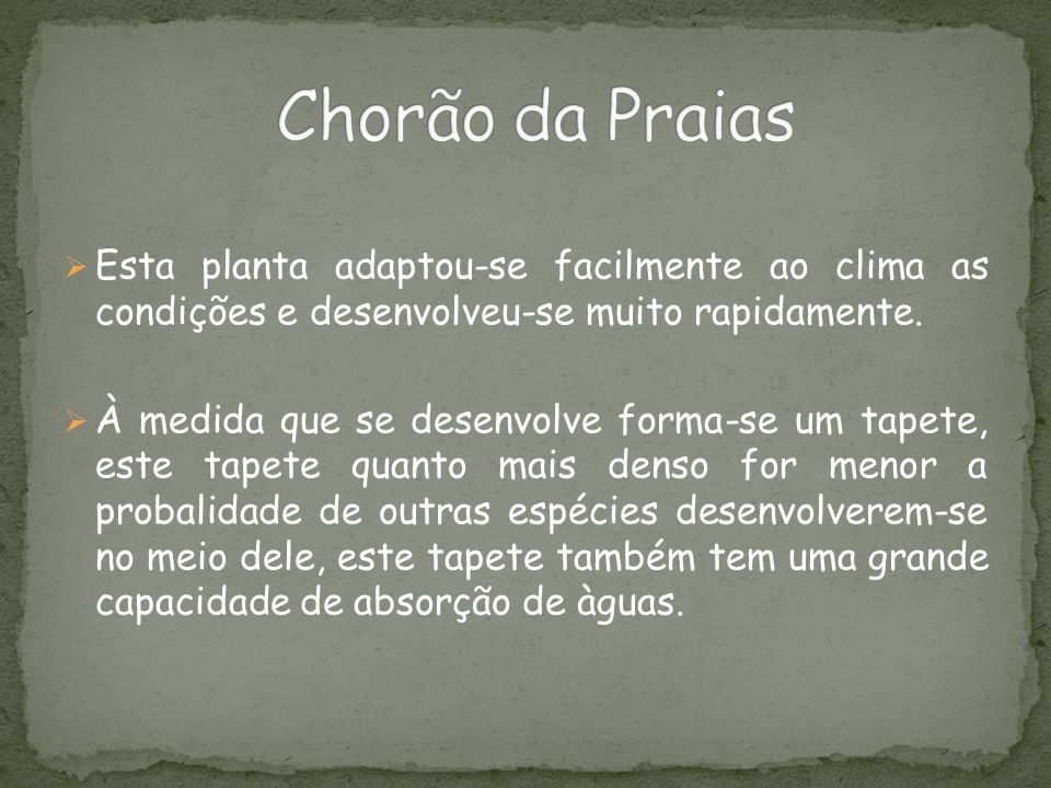 Chorão da Praias Esta planta adaptou-se facilmente ao clima as condições e desenvolveu-se muito rapidamente.