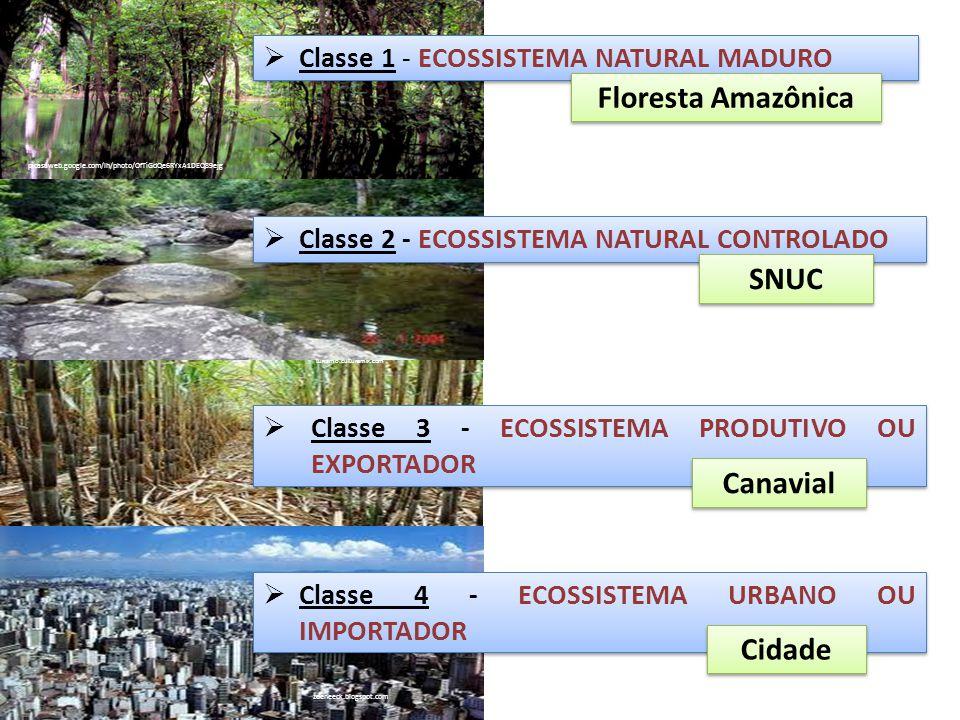 Floresta Amazônica SNUC Canavial Cidade