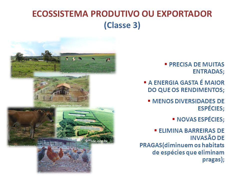 ECOSSISTEMA PRODUTIVO OU EXPORTADOR (Classe 3)