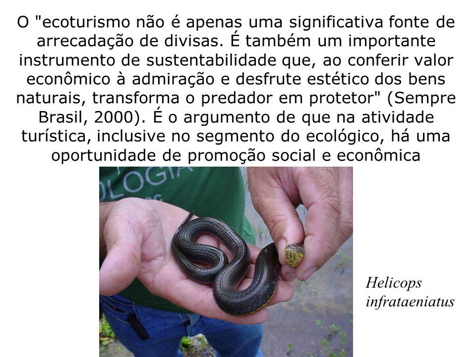 O ecoturismo não é apenas uma significativa fonte de arrecadação de divisas. É também um importante instrumento de sustentabilidade que, ao conferir valor econômico à admiração e desfrute estético dos bens naturais, transforma o predador em protetor (Sempre Brasil, 2000). É o argumento de que na atividade turística, inclusive no segmento do ecológico, há uma oportunidade de promoção social e econômica