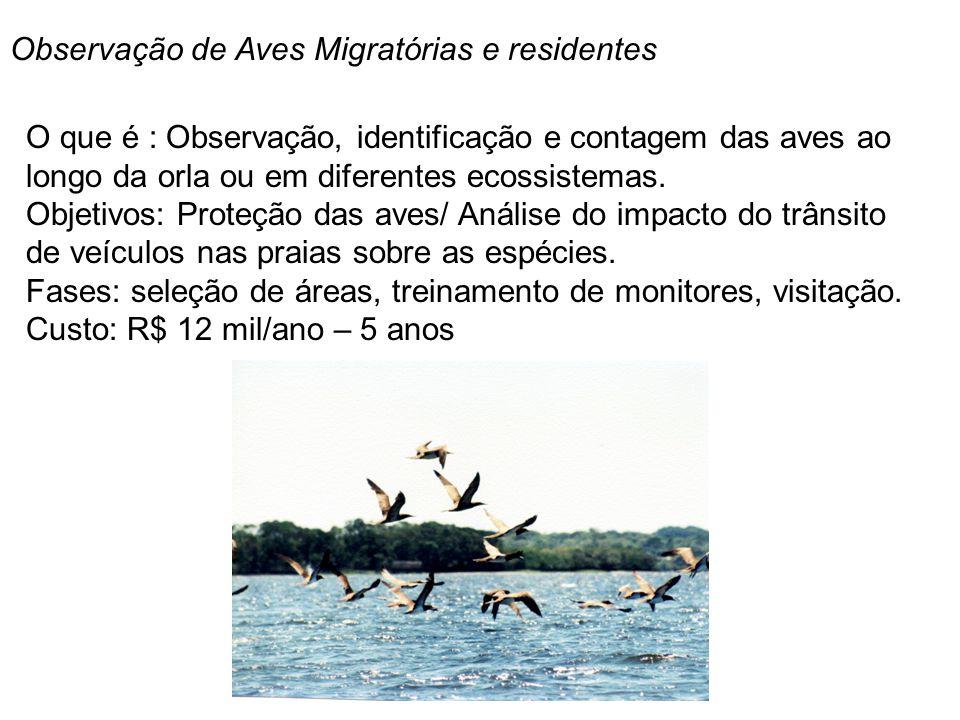 Observação de Aves Migratórias e residentes
