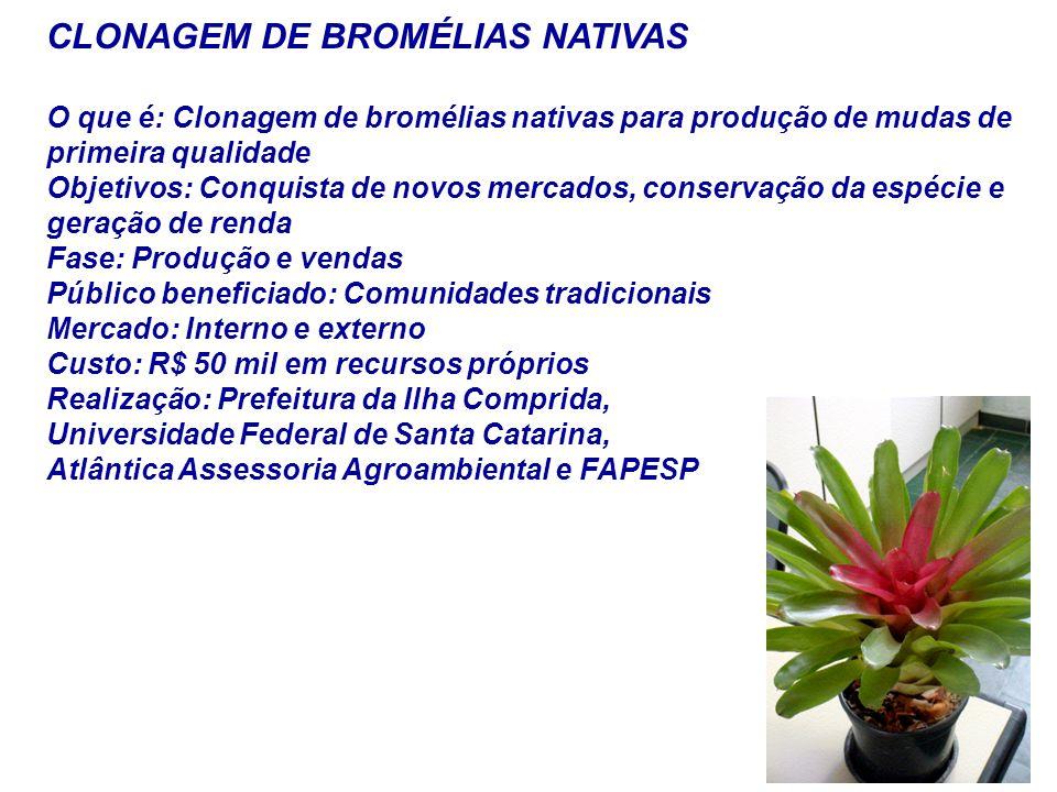 CLONAGEM DE BROMÉLIAS NATIVAS