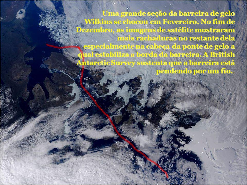 Uma grande seção da barreira de gelo Wilkins se chocou em Fevereiro