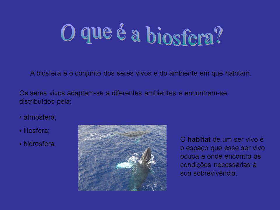 A biosfera é o conjunto dos seres vivos e do ambiente em que habitam.