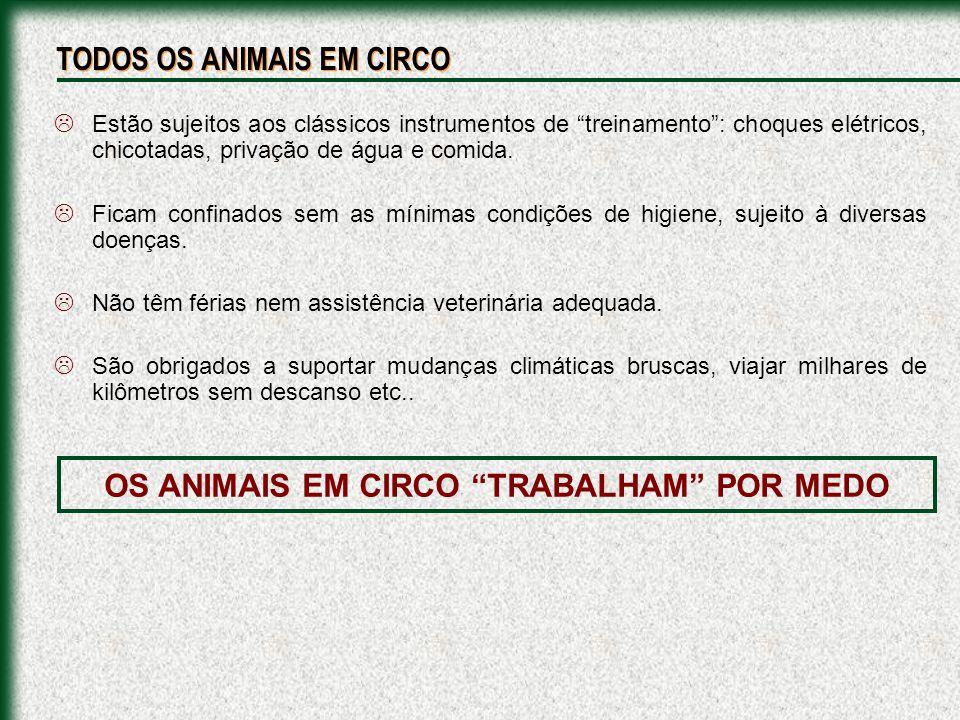 OS ANIMAIS EM CIRCO TRABALHAM POR MEDO