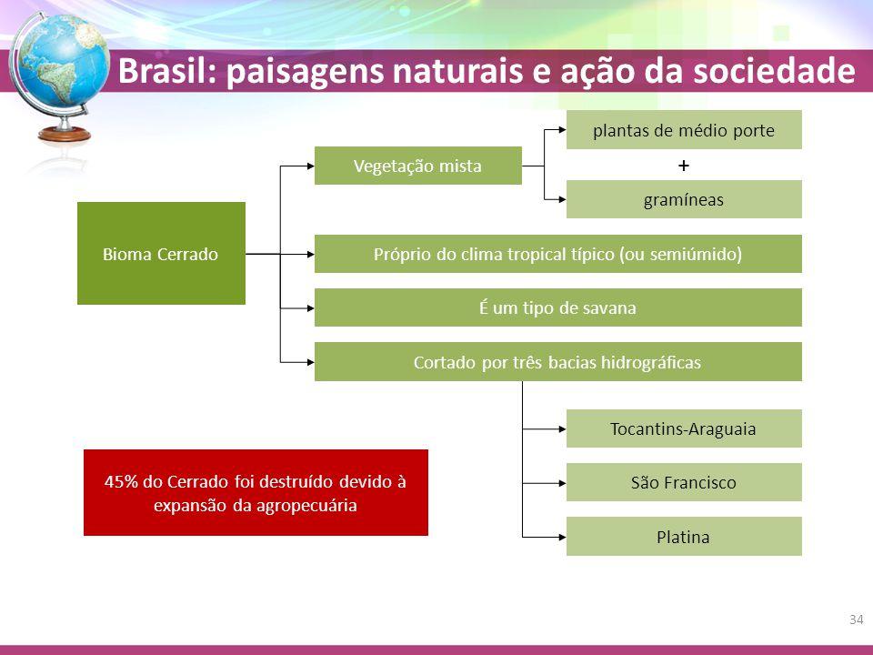 + plantas de médio porte Vegetação mista gramíneas Bioma Cerrado