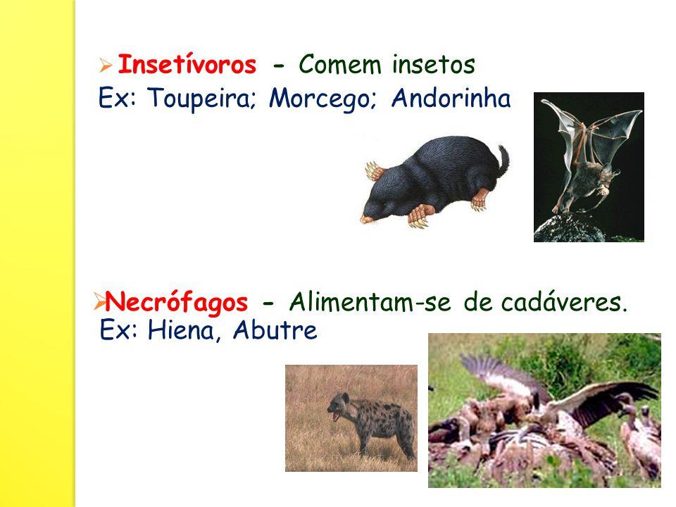 Insetívoros - Comem insetos