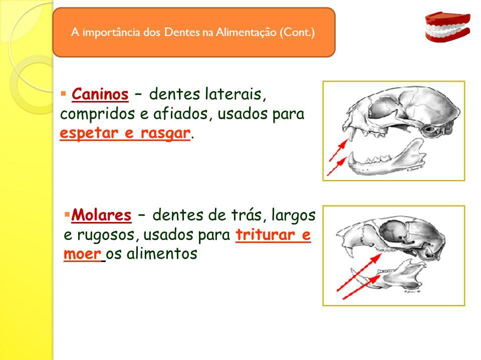 A importância dos Dentes na Alimentação (Cont.)