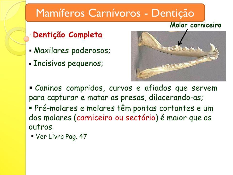 Mamíferos Carnívoros - Dentição