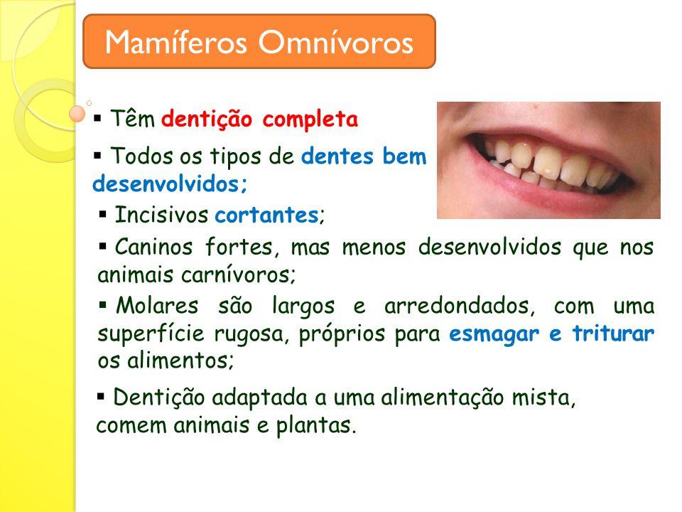 Mamíferos Omnívoros Têm dentição completa