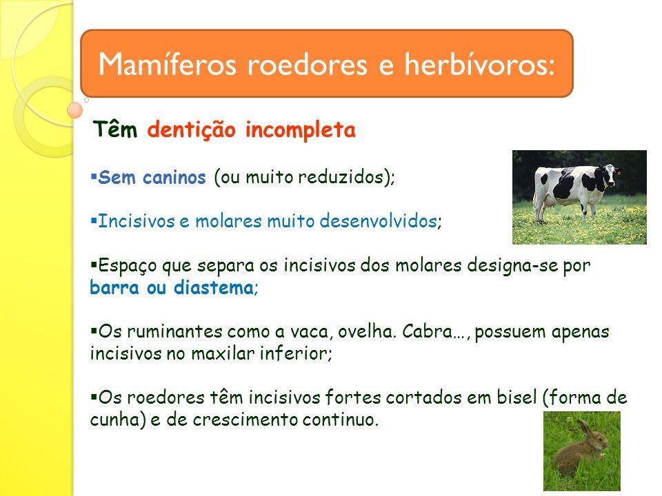 Mamíferos roedores e herbívoros: