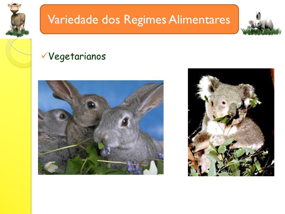Variedade dos Regimes Alimentares