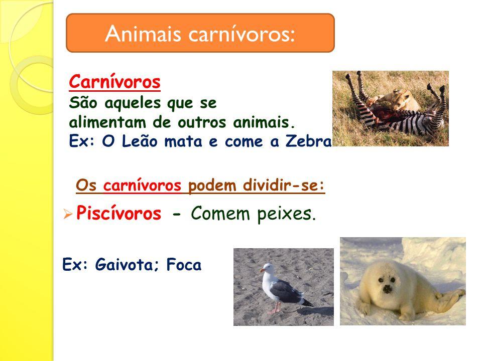 Animais carnívoros: Carnívoros Piscívoros - Comem peixes.