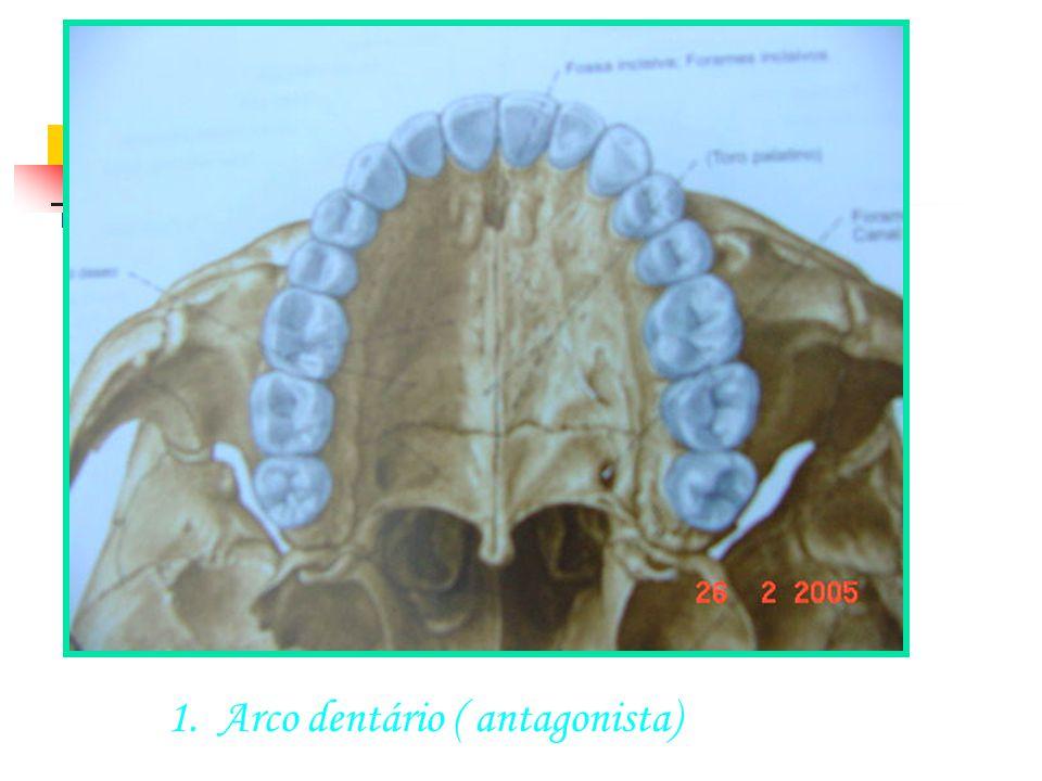 SUTURA ÓSSEA Arco dentário ( antagonista)